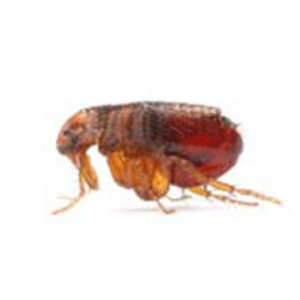 Home Pest Control Is Good For the Environment