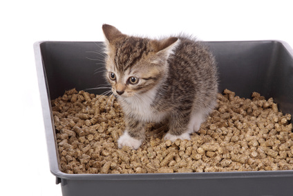 Finding Natural Cat Litter Box For Your Furred Animal