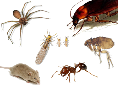 Pest Control Company - Free Your House From Pests