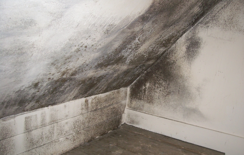 5 Best Condensation Treatments To Keep Your House Mould Free