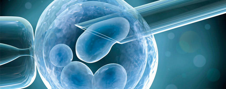 IVF With or Without Donor Egg – Which Method To Choose?