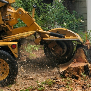 Removing The Dangerous Stumps