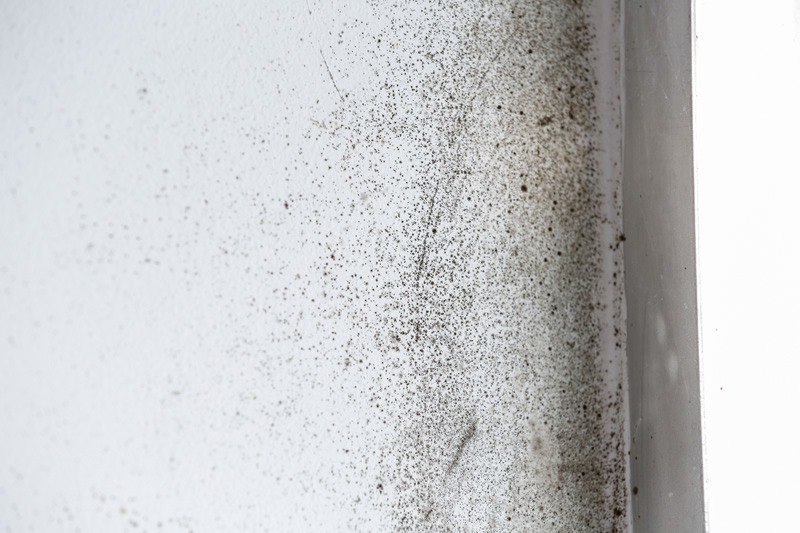 Different Tips To Get Rid Of Damp And Mould