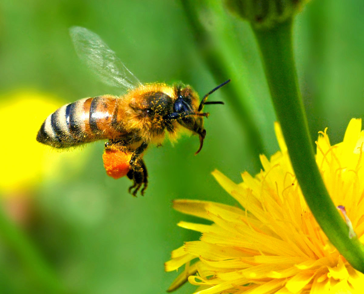 Bee Removal Services - Your Best Option when it comes to Bee Removal