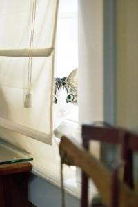 A cat is hiding