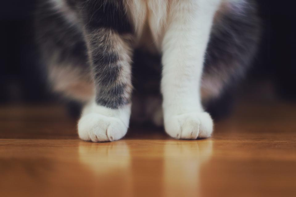 Cat's paws on the floor