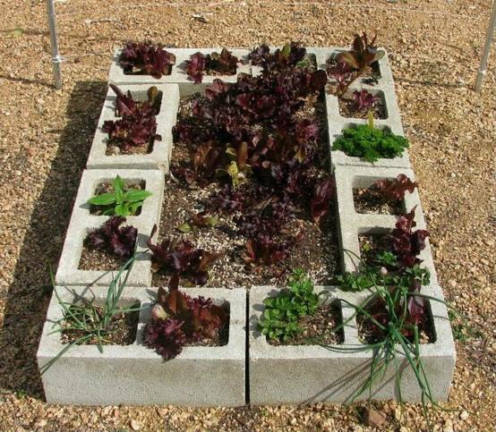 Cinder blocks raised gardening beds