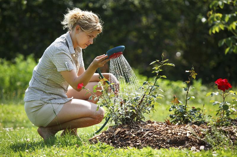 How To Make Roses Last Longer: 9 Pro Tips