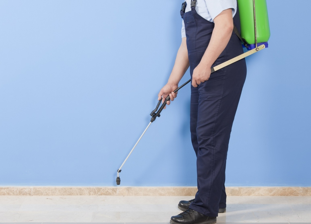How Often Should You Have General Pest Control Carried Out On Your Home?
