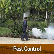 Avail Effective Pest Control Services To Get Rid Of Roaches, Bed Bugs, Ants and Termites