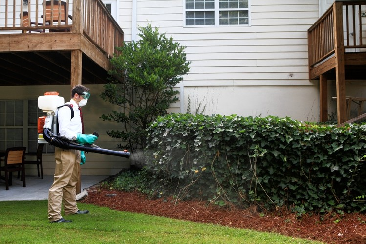 Pest Control Is A Must For Every House