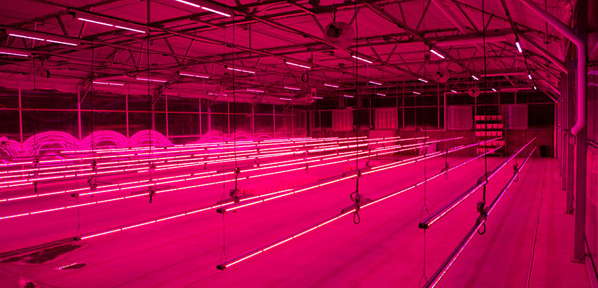 How Recreational Cannabis Legalization In California Affects Led Grow Light Sales