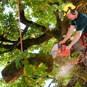 Treat Sick Trees With Tree Services
