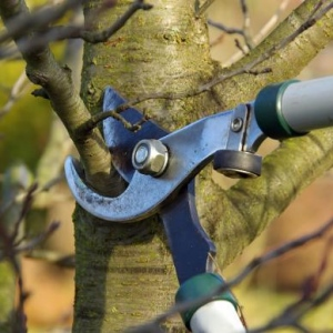 Tree Surgeons Enhance The Value Of Any Property
