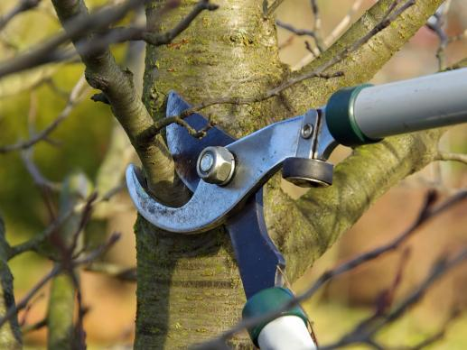 Tree Surgeons Enhance The Value Of Any Property