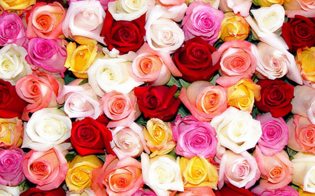 Meanings Of Different Colours Of Roses