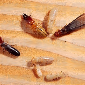 Insights Into Termite Inspection Boca Raton from Multidimensional Perspective