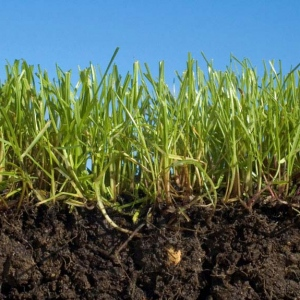 Fertilizing Your Lawn Organically