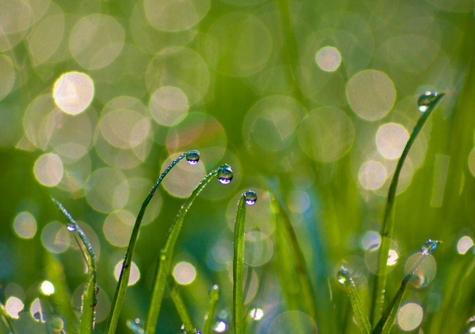 5 Breakthroughs In Landscaping Technology
