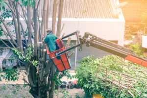 Corporate Tree Removal Made Easy