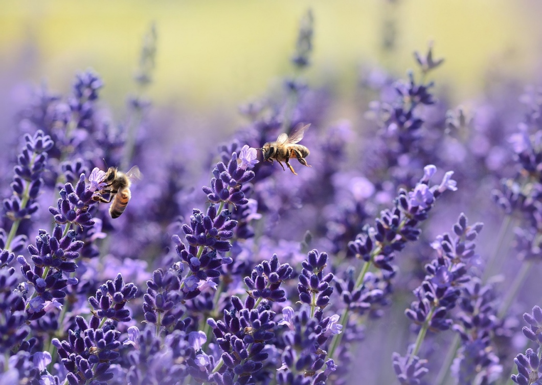 How We Can Save The Bees In Australia